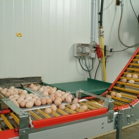 Egg conveyors